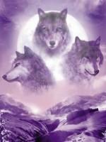картинки на телефон красивые волки