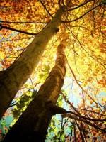 Картинки на мобильный телефон осень